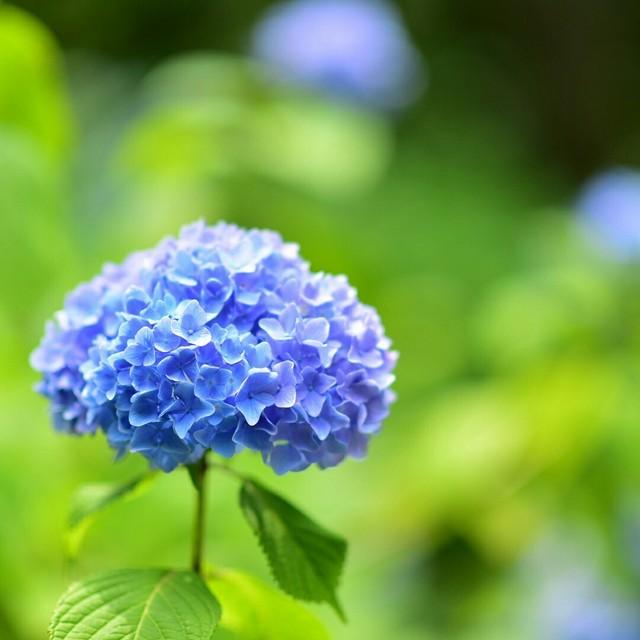 20170611鎌倉_170618_0005.jpg