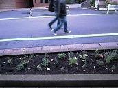 路上の草木を見て歩く ~原宿でポケットパークを探そう編~