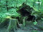 自然に学ぶ 〜森林が教えてくれること〜