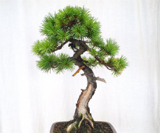 �����������
